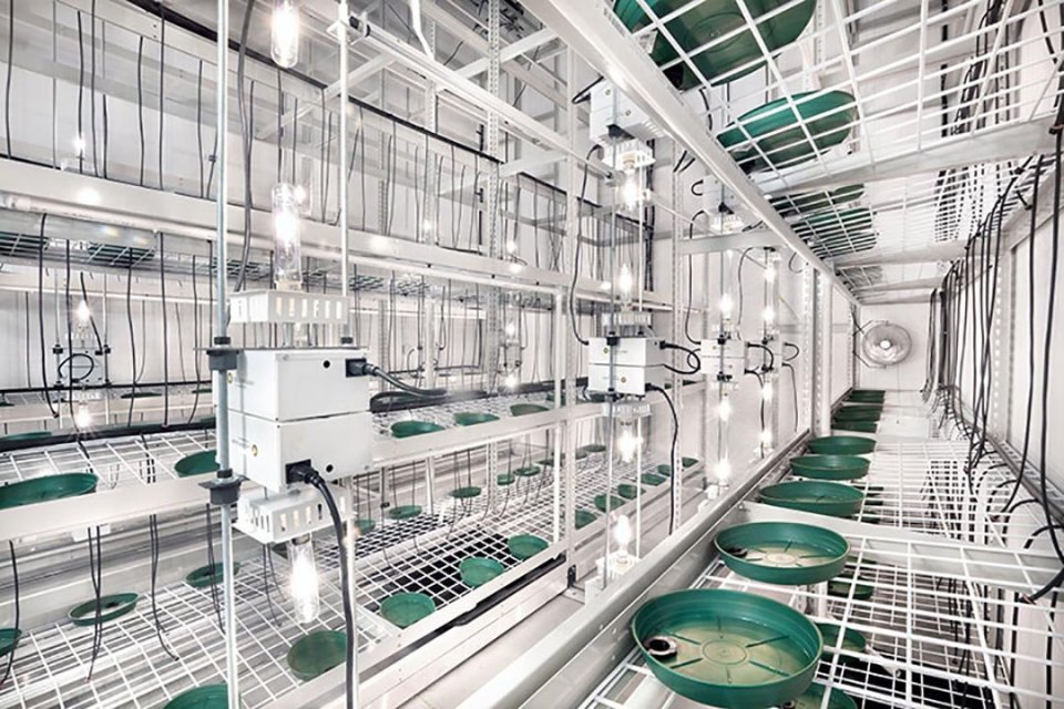 Medical Cannabis Cleanrooms - Grow Rooms for Medicinal ...