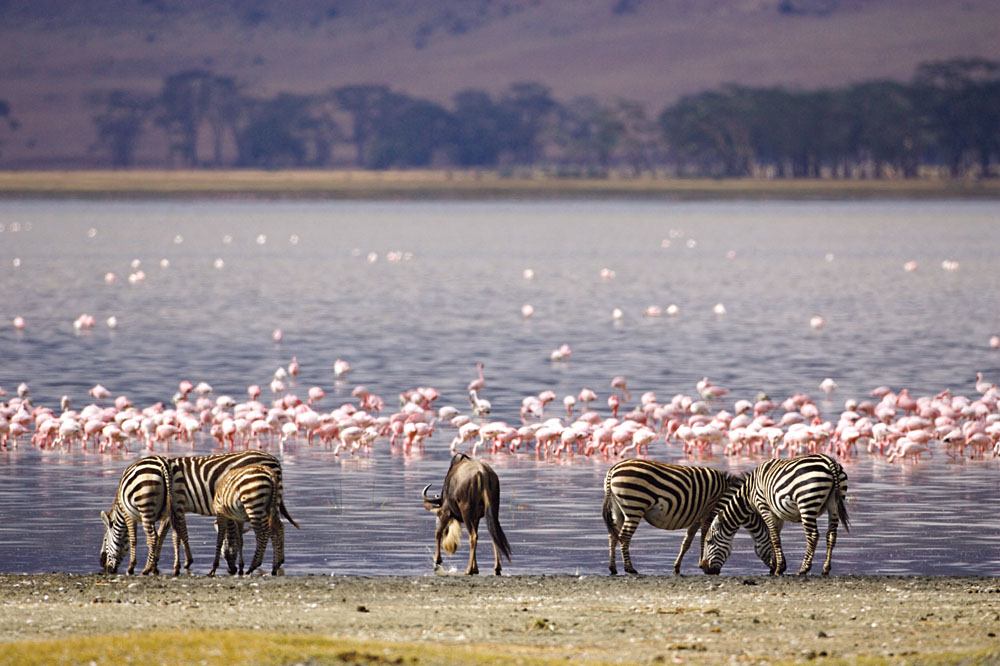 Flamingos Galore And More In Lake Nakuru National Park