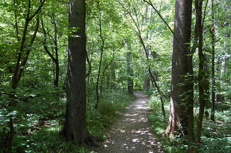 Pin Oak Trail