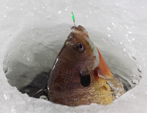 Fish_ice