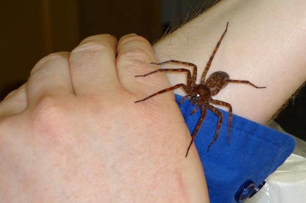 spider2