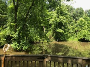 Frog & Turtle Pond at Farbach-Werner Nature Preserve