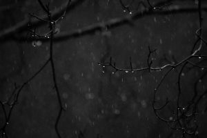 Rain falls on tree branches at Winton Woods.