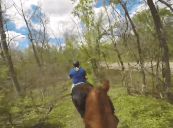 Point of view of horse rider