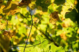 Leaves on a tree are in varying shades of green and yellow.