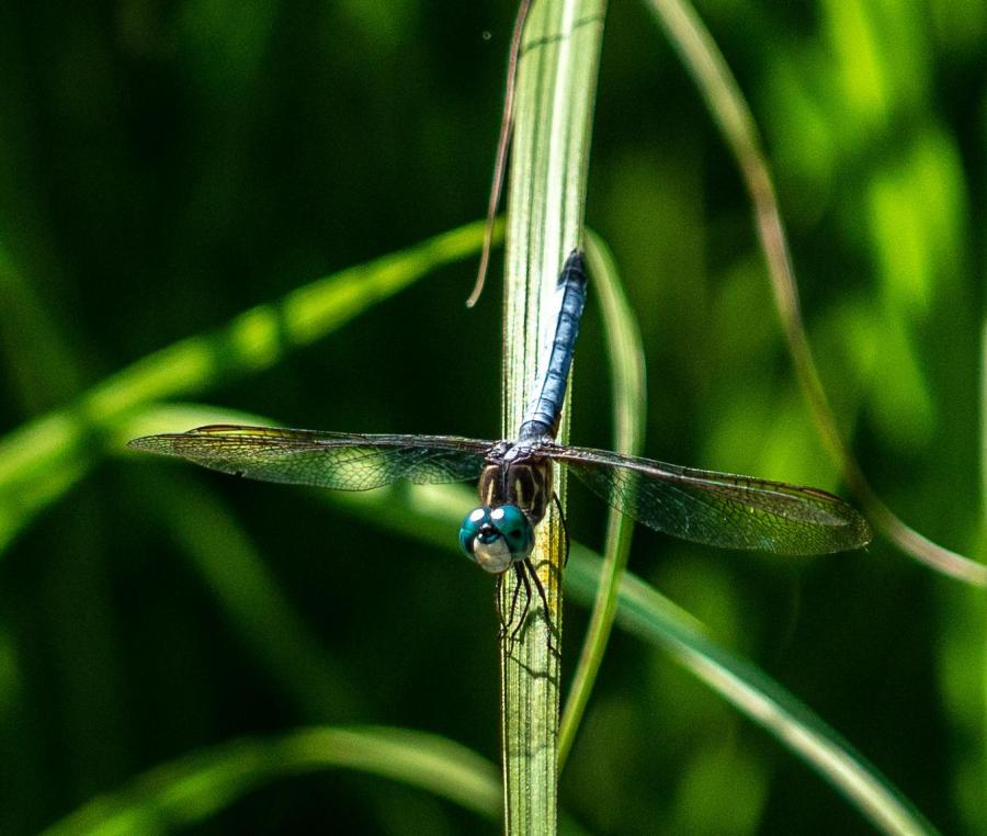 A dragonfly rests on a plant.