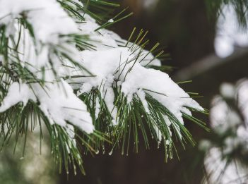 Snow covers the branches of a pine tree at Winton Woods.