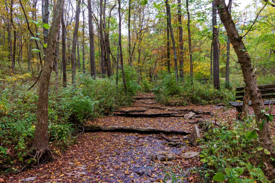 The Wood Duck Trail at Mitchell Memorial Forest.