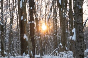 The sun sets among snow-covered trees. The sun is shining a bright orange.