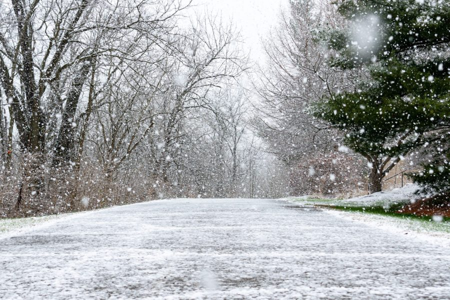 Snow falls over a paved walking trail. Trees line both sides of the trail.