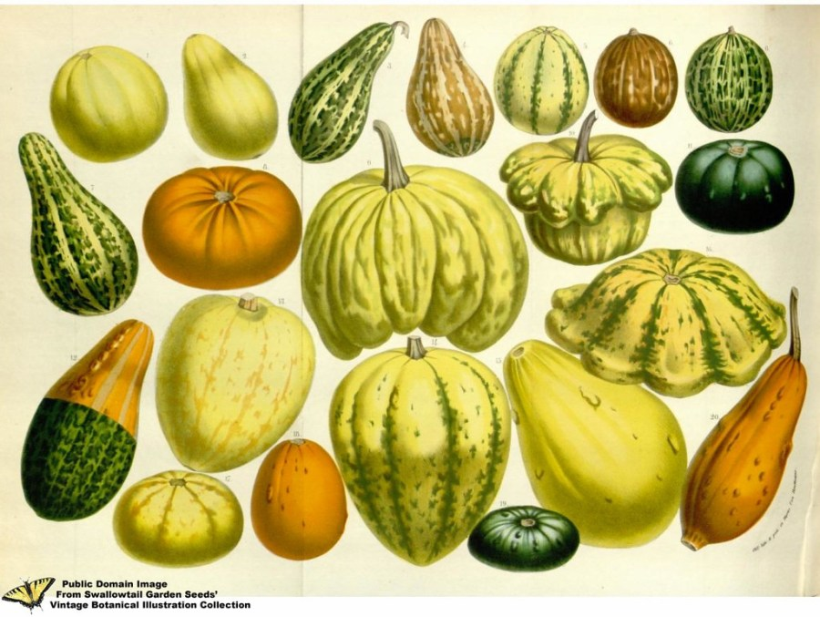 An illustrated graphic shows the different types of squashes in America.