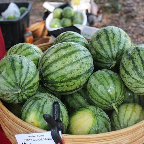 A basket holds small, green-striped watermelons.