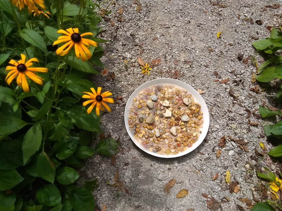 A dish full of pebbles and water creates puddler for flying insects.