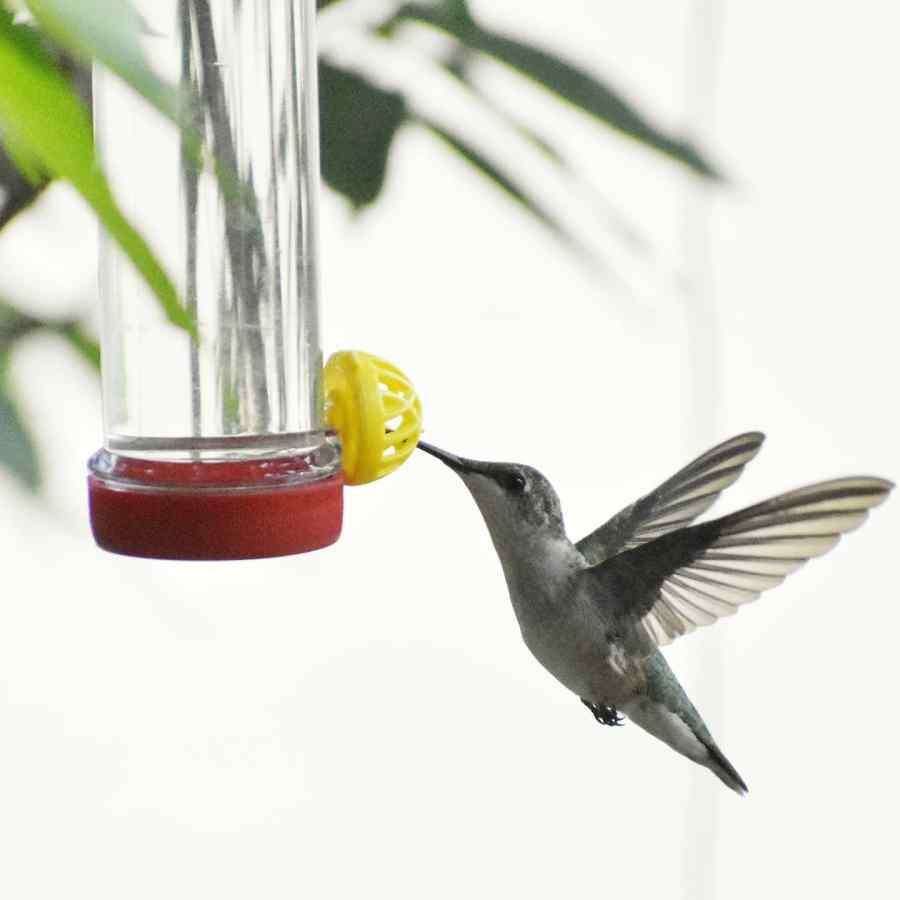 A hummingbird is in mid-flight, eating at a bird feeder.
