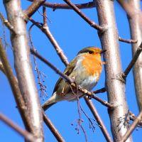 8 ways to help local wildlife in your garden