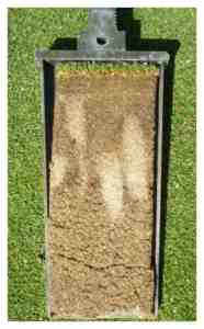 The Sand Columns from past Aerification