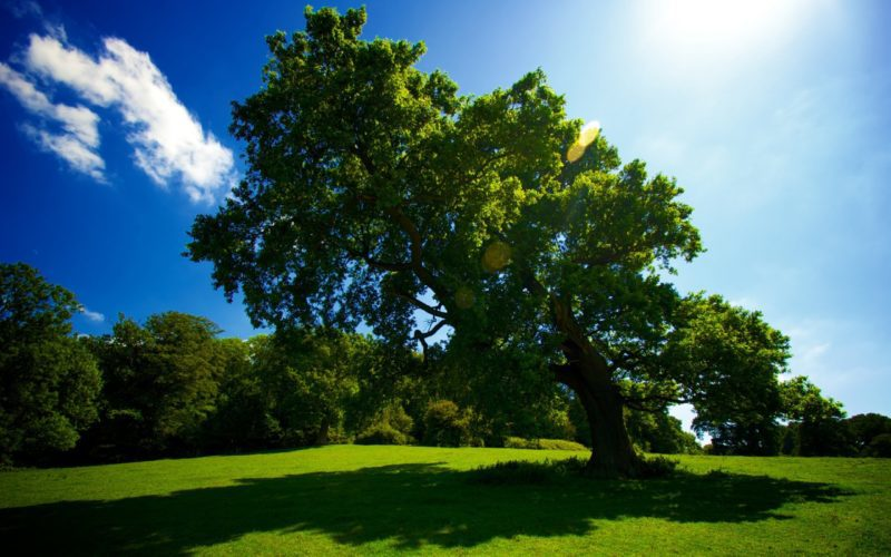 Tree Sun Shade