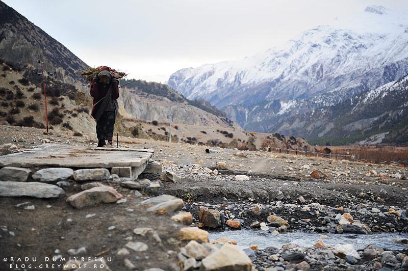 Imagine cu o femeie nepaleză cărând o stivă de lemne, în apropierea orașului Manang, Nepal. 2010.