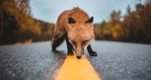 Mozilla Suspended Firefox Send