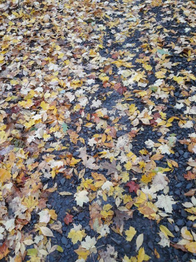 fallen-leaves on ground