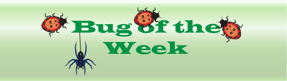 Bug-of-the-week