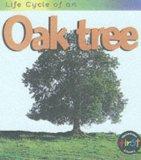 life-cycle-oak-tree