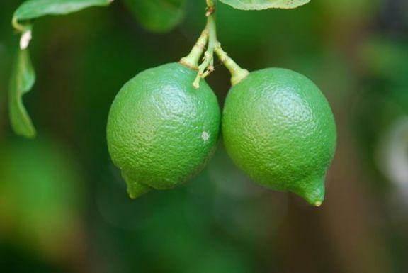lemons- two-green
