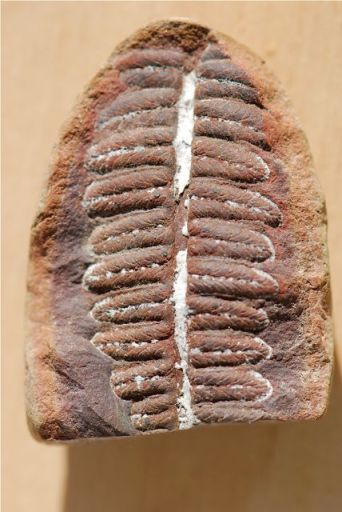 leaf-fossil