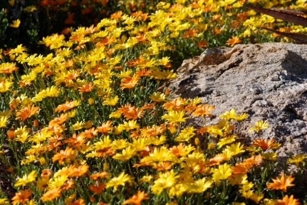 flower-spring-blog