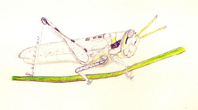 grasshopper-drawing-growing