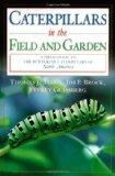 caterpillars-field-and-garden