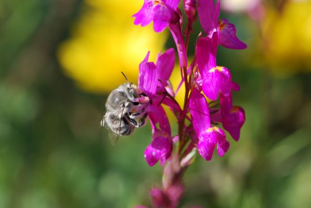 2013-spring-fuzzy-bee-better