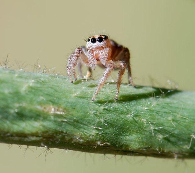 2013-jumping-spider
