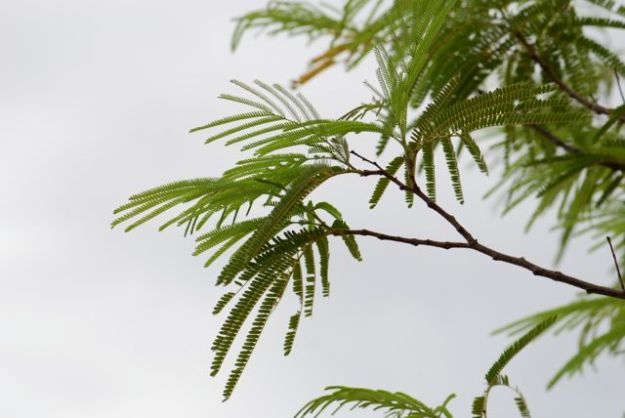 desert-fern-branches