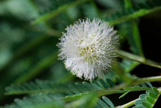 desert-fern-flower-1