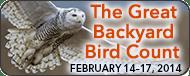 great-backyard bird count 2014