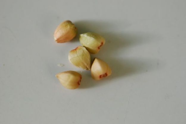 mystery-seeds-191-1000