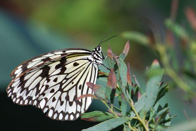 paper-kite-perching
