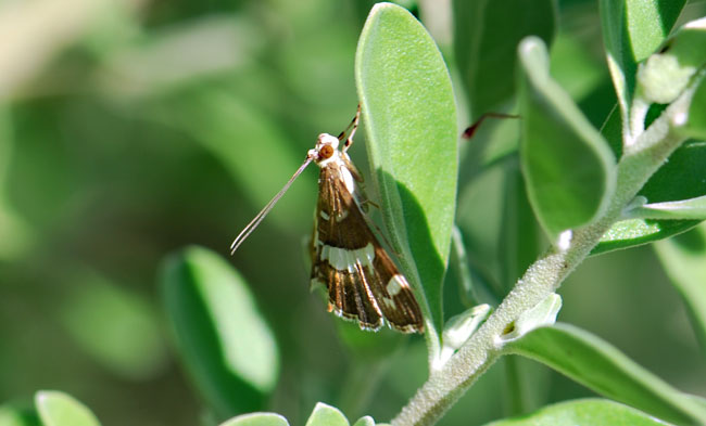 moth-with-spots