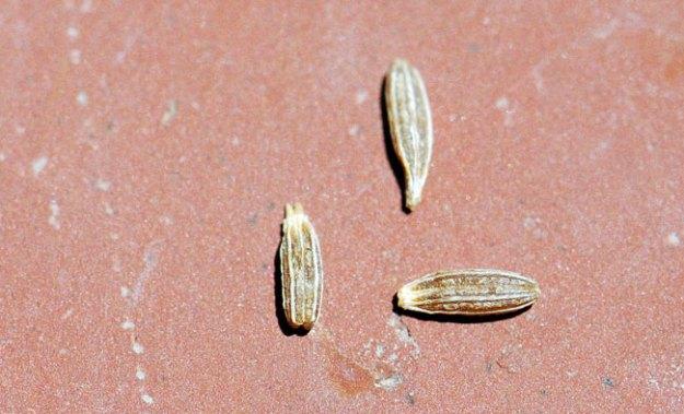 mystery-seeds-236