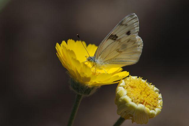 mystery-burrefly-3-identification