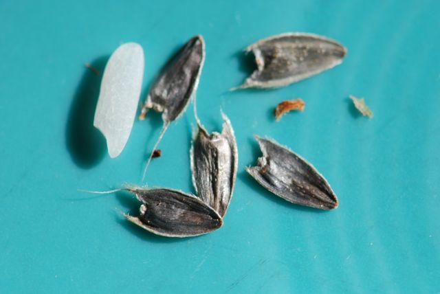 mystery-butterfly-garden-seeds-444