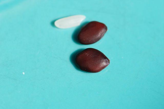 mystery-seeds-247-2