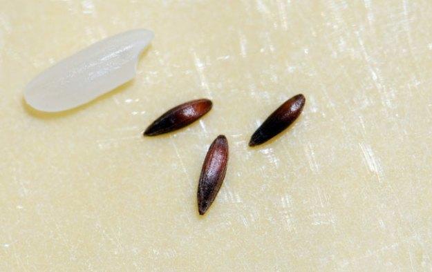 mystery-seeds-248-4