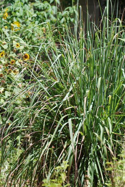 lemongrass-another-view-003