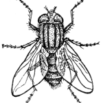 HouseFly2_(PSF)
