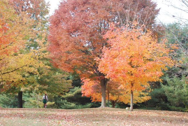 fall-color-trees