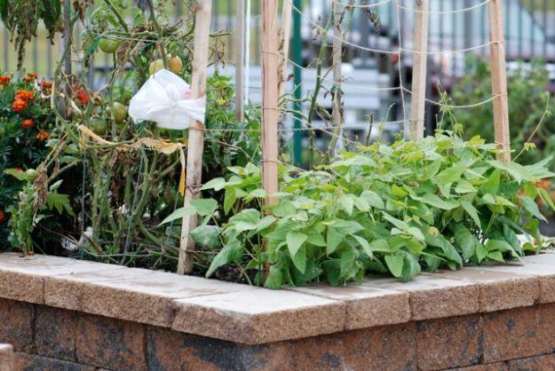 garden-0014