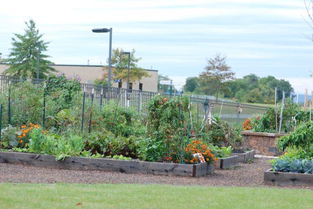 hershey-community-garden