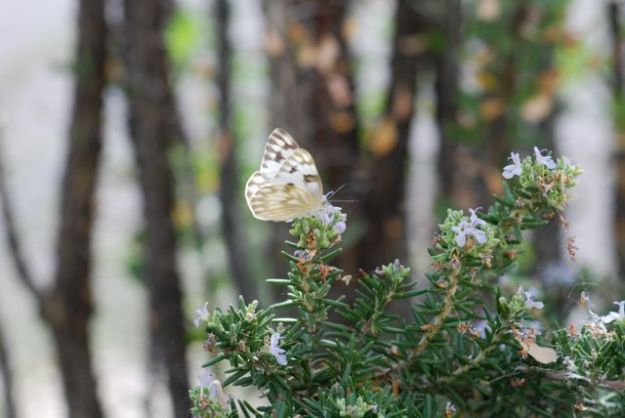 white-butterfly-light-on-wings_0243